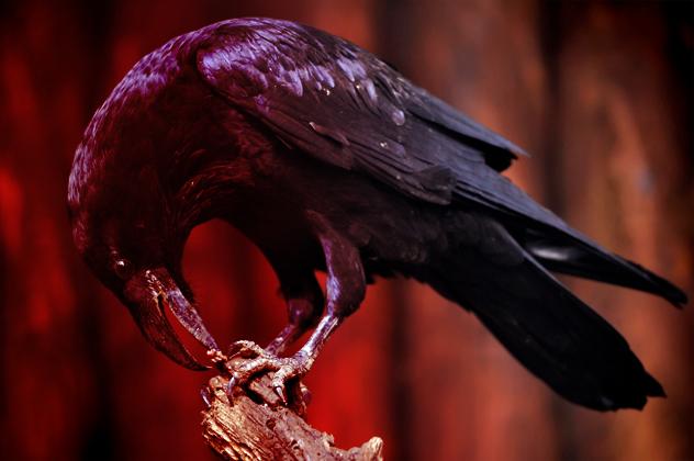 10- crow