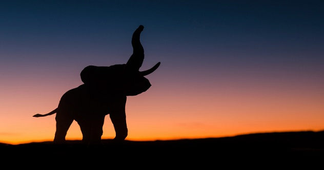 featured elephant