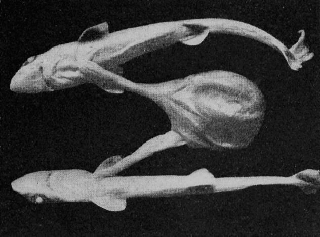 mutant fish