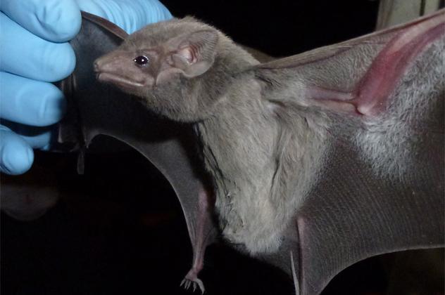 10- tomb bat