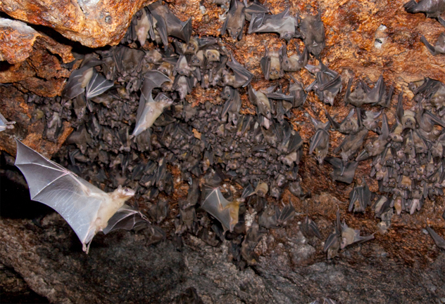 4- fruit bat 2