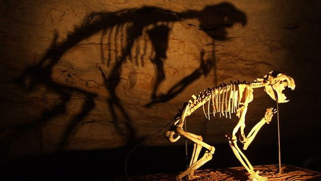 640px-Thylacoleo_skeleton_in_Naracoorte_Caves