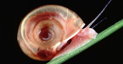featured snail
