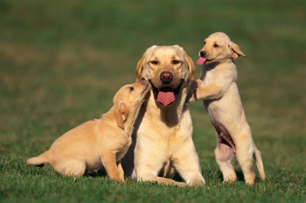 7- animal rights