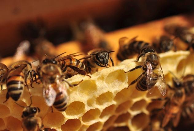 1_HoneyBee