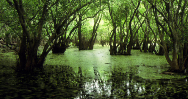 5-swamp-481892663