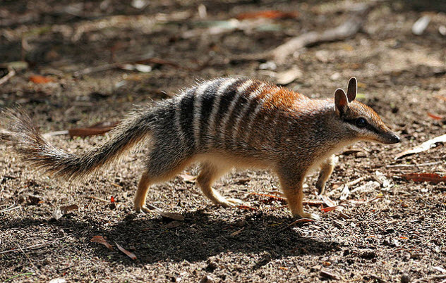 6a-numbat-use-this