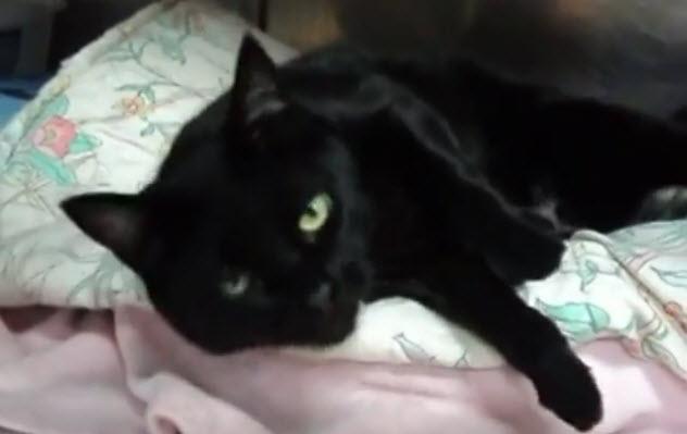 7-black-cat-bed