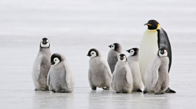 5-penguins_000011385874_Small