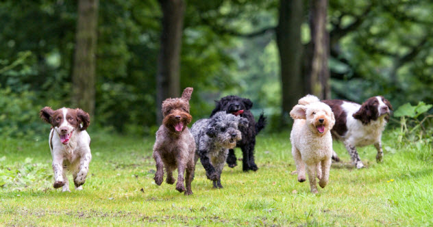7-fleeing-dogs_000021826875_Small