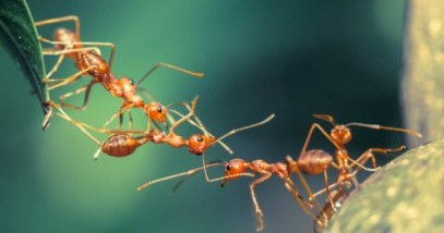 feature-ant-bridge_000052308980_Small