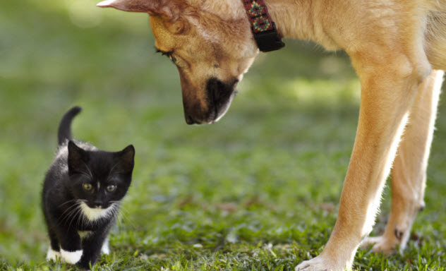 7-cat-and-dog_000056879964_Small