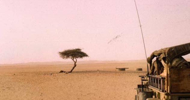 10-tenere-tree