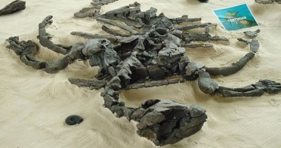 2-extinct-sea-turtle-fossil