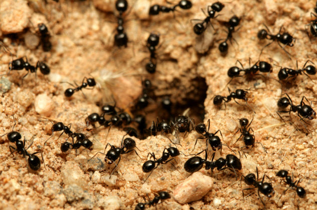 3-ants_000007904791_Small