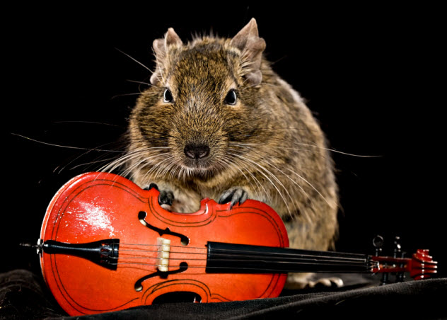 5-mouse-with-cello_000053294806_Small