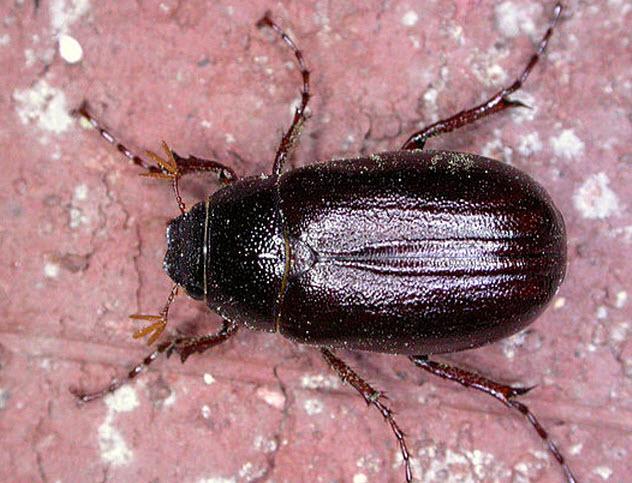 9-june-bug