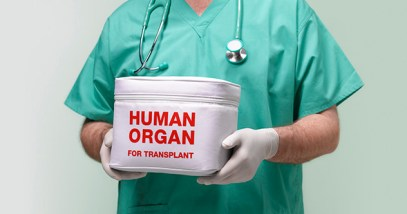 Surgeon with human organ for transplant