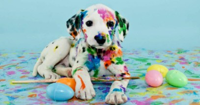 feature-10b-easter-dog_36922364_SMALL