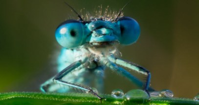 feature-5-dragonfly-eyes_34812790_SMALL