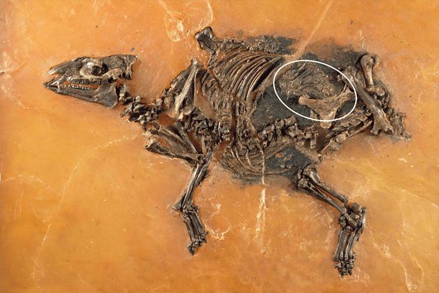 6- ancient-pregnant-mare
