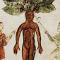 Medieval Mandrake Featured
