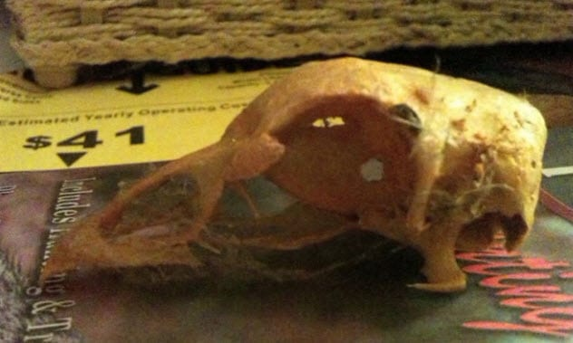 4-carcass