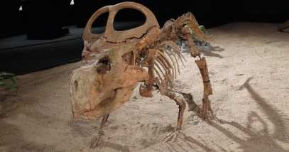 protoceratops-featured