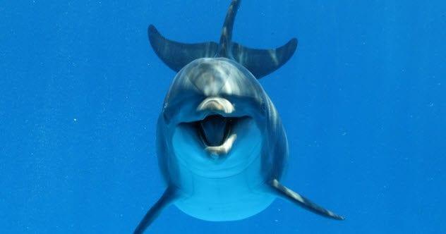 2b-bottlenose-dolphin-529663148