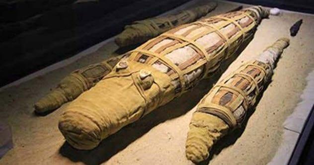 3-multiple-croc-mummy