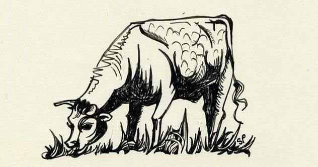 7-plath-cow