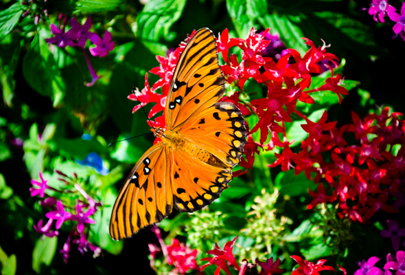 butterfly in flowers at Epcot