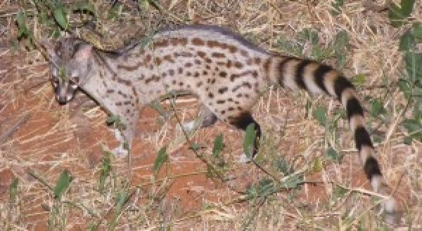 Forest Genet