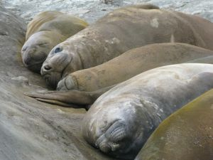E Seals by Cheryl E Leonard