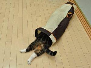 maru the cat4