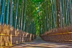 Kyoto2011©IoanLiviuOrletchi021