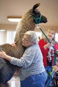 hug a llama colors magazine