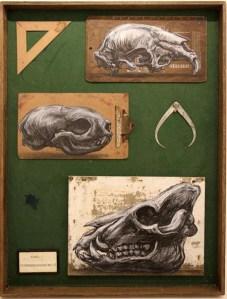 cranium roa