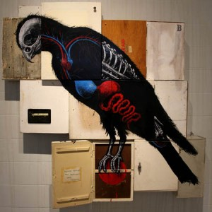 falcon roa