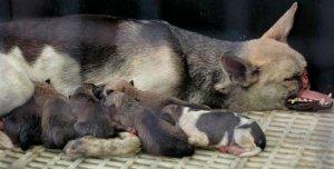 kabang-puppies