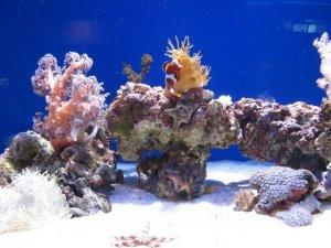 otaru aquarium1