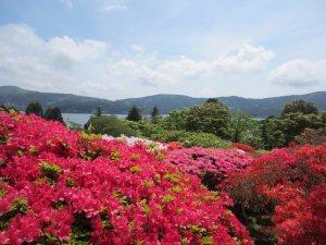 flowers japan 1