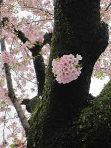 flowers japan 18