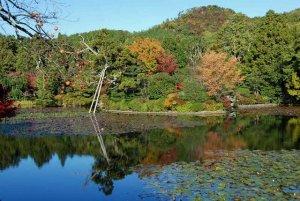 ryoan-ji temple3