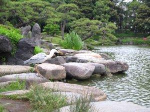 kiyosumi gardens in tokyo 15
