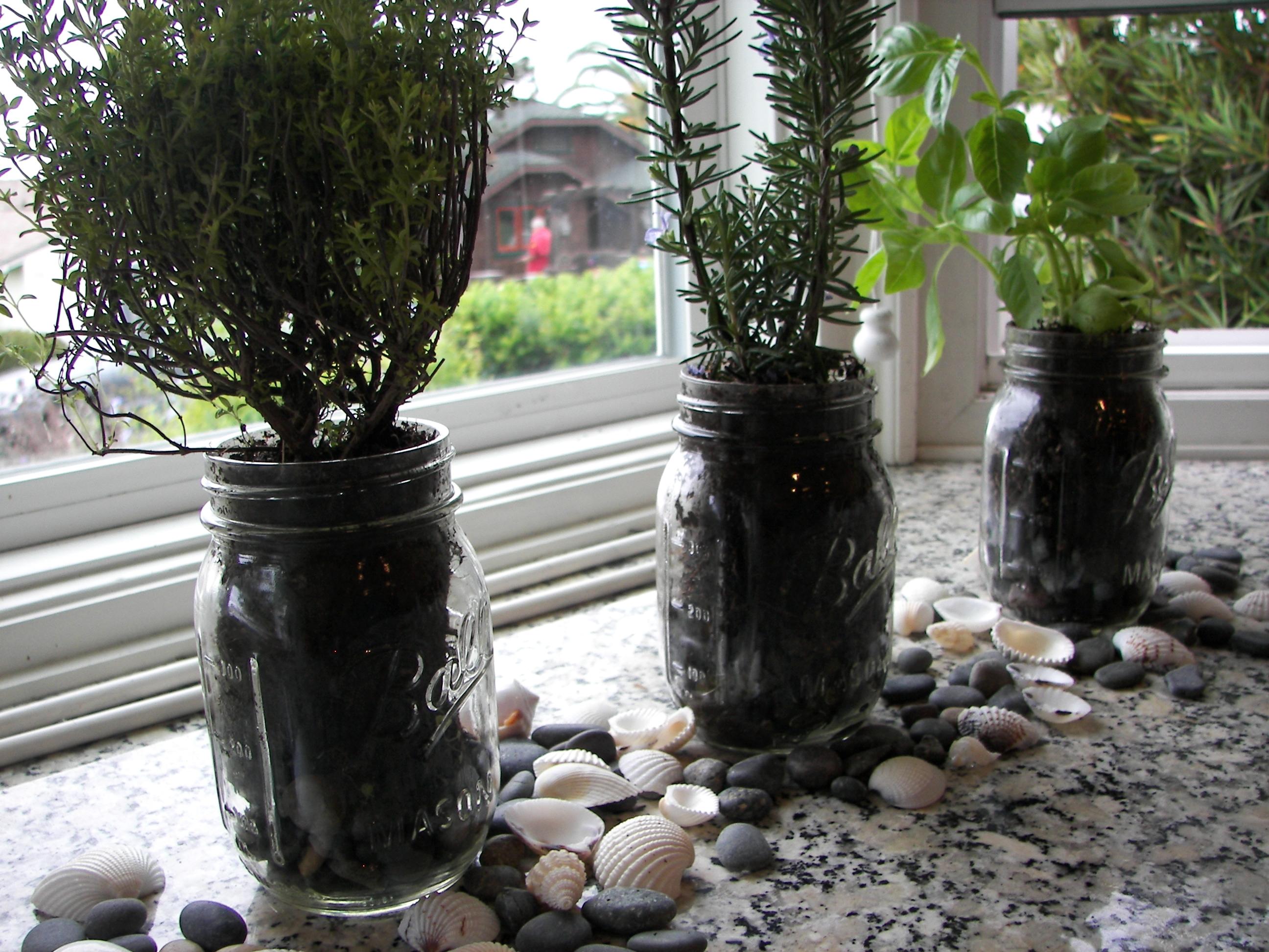 Fullsize Of In House Herb Garden Kit