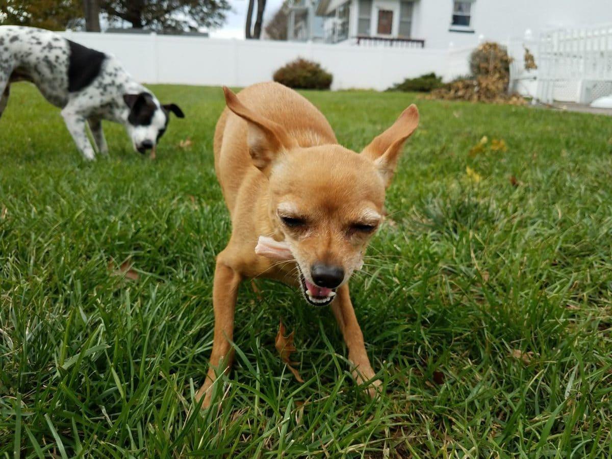 Fullsize Of Why Do Dogs Like Bones