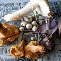 Mushroom Hunts