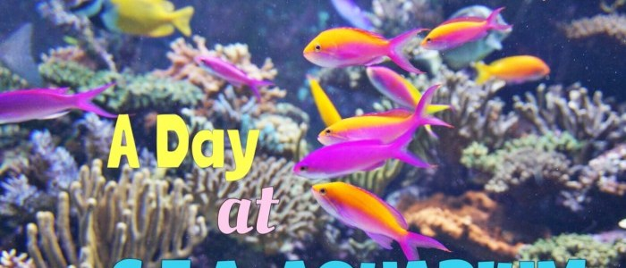 TOURIST GUIDE: S.E.A. AQUARIUM