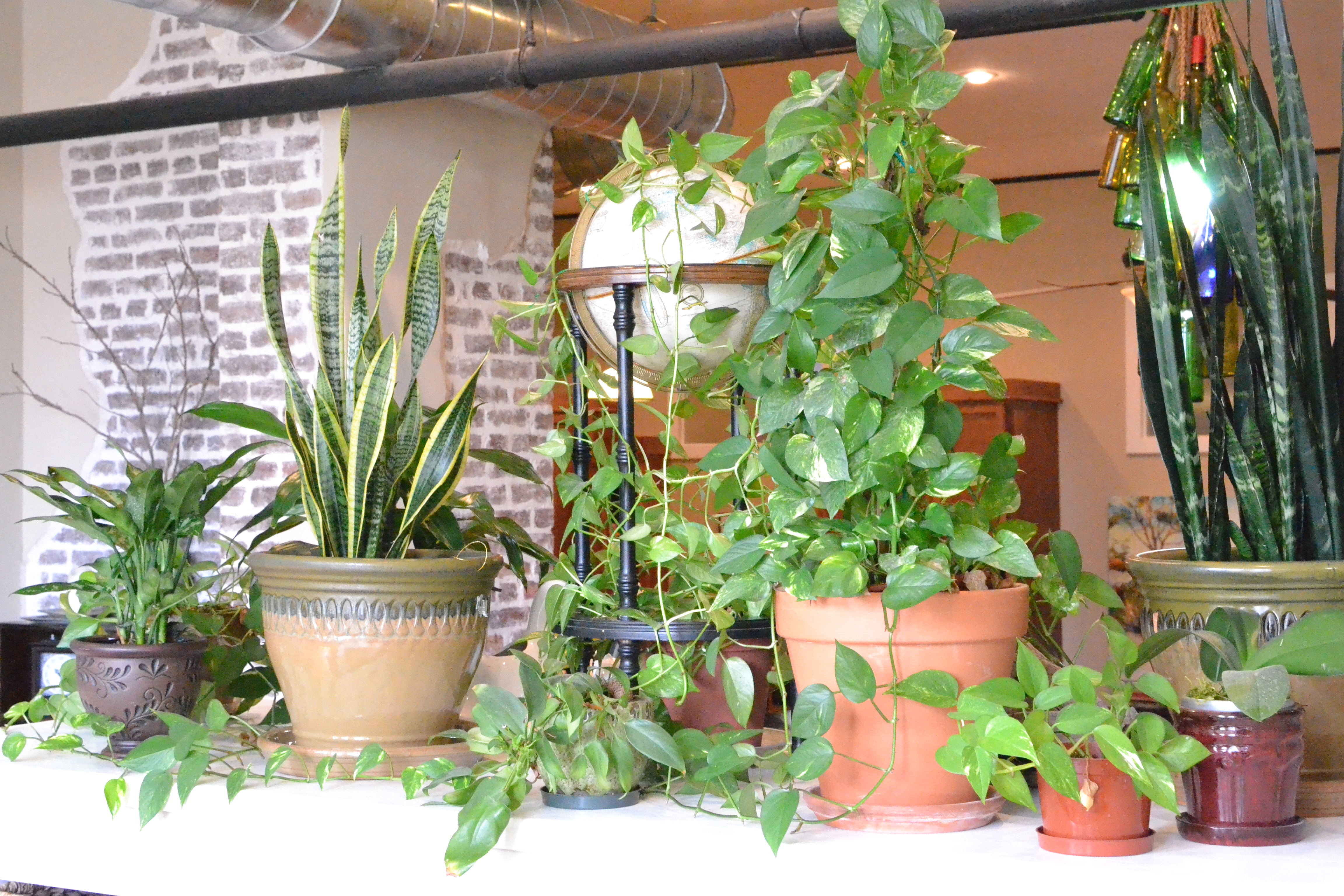 How To Plant Indoor Plants Arranging Indoor Plants Little Paths So Startled